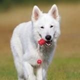 Bons plans - Les jouets indispensables pour chien à moins de 30 euros