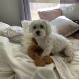 Son chien perd son jouet préféré, ce qu'il fait pour l'aider est particulièrement émouvant
