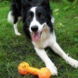 Les jouets en plastique dangereux pour les chiens ?