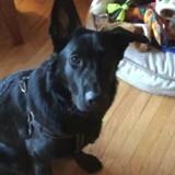 Elle demande à son Berger allemand quel est son jouet préféré : le choix du chien choque les Internautes