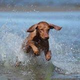 Son chien se baigne dans un lac du Gers : quelques minutes plus tard, c'est le drame