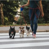 Ce chien traverse la route en donnant la patte à son maître (Vidéo)
