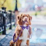 Fête des Animaux 2019 : venez célébrer les animaux de compagnie ce 28 septembre