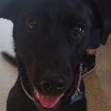 Leur chien joue avec une balle : 1 semaine après, il tire la langue et tout le monde panique