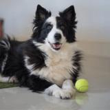 Un chien adopté fait une fugue : il est ramené à celui qui l'avait abandonné... qui ne veut plus le rendre !