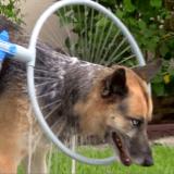 Découvrez le Woof Washer, la manière amusante et pratique de laver son chien !