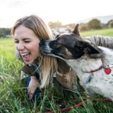 Pourquoi il ne faut pas laisser votre chien vous lécher ?
