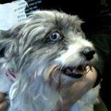 Employé dans un refuge, il maltraite et abandonne des chiens