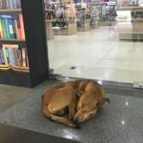 Un chien errant rentre dans une librairie, la suite de l'histoire fait le tour du monde (Vidéo)