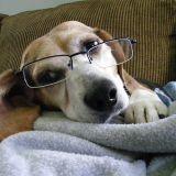 Votre animal est-il intelligent ?