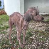 Elle trouve un chien négligé et réalise qu'il ne sait plus manger, le vétérinaire fait alors une annonce choc