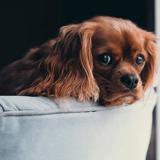 Connaissez-vous le homesitting, la nouvelle tendance pour faire garder son animal de compagnie ?
