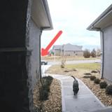 Il observe son Labrador à l'entrée de la maison : tout d'un coup, ce qu'il voit le laisse sans voix