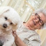 Parole de chien : des toutous qui rendent le sourire aux personnes âgées dans les maisons de retraite