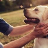 Dogs : Une série documentaire sur les chiens va sortir sur Netflix