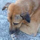 Douleur chez le chien : 3 postures qui doivent vous alerter