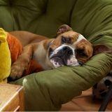 Comment éviter les troubles digestifs chez le chien ?