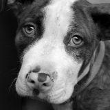 La leishmaniose, cette maladie qui tue de plus en plus de chiens