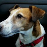 Trucs et astuces pour que votre chien ne soit pas malade en voiture