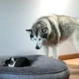 Un gros chien découvre quelqu'un dans son panier, sa réaction fait fondre tout le monde (Vidéo)