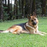 Malouk, le chien star du défilé du 14 juillet