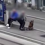 Un retraité frappe son chien à un arrêt de tram, la vidéo est glaçante