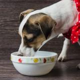Les restes de table : est-ce bon pour mon chien ?