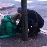 Elle ne peut pas emmener son chien à la Poste : la décision qu'elle prend coupe le souffle de tout le monde