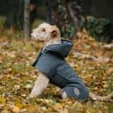 Faut-il mettre un manteau à son chien pour le protéger du froid en hiver ?