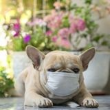 Coronavirus : comment gérer mon chien ou mon chat si je suis en quarantaine ?