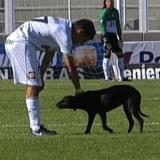 Un chien errant interrompt un match de foot... pour se faire câliner !