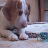 Le chien et le robot crabe, un combat sans merci ! (Vidéo du jour)