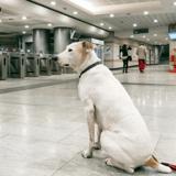 Une Havraise lance une pétition pour permettre aux grands chiens de prendre les transports en commun