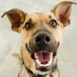 Mon chien peut-il se souvenir des personnes qu'il a rencontrées ?