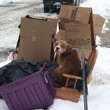 Ils déménagent et abandonnent leurs affaires sur le trottoir… avec leur chien