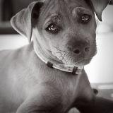 Le chien le plus mignon des USA va gagner… 1 million $