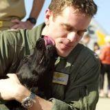 Des chiens psys pour les militaires américains