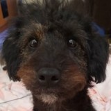 Son chien fouille dans un tiroir : il se retourne et elle explose de rire en voyant ce qu'il a dans la bouche !