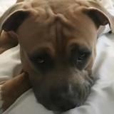Grâce à son cri digne d'un dinosaure, ce chien fait le buzz sur Internet (Vidéo)