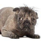 Edito : Oui à l'adoption des chiens « moches » !