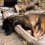 200 000 fléchettes empoisonnées pour tuer des chiens vendues en Chine