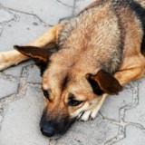 Elles enterrent leur chien, quelques jours plus tard en surfant sur le net elles ont le choc de leur vie