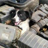 Sa voiture tombe en panne, elle ouvre son capot et trouve… un chien !