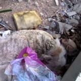 Ce chien avait abandonné tout espoir de vivre jusqu'à ce qu'il lève les yeux et remarque quelque chose
