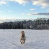 Les plus belles photos de vos chiens et chats dans la neige !