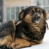 Pour ou contre une loi interdisant de laisser son chien dehors dans le froid ?