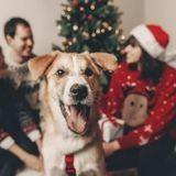 3 cadeaux immatériels à donner à votre chien pour Noël