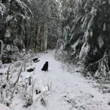 En pleine randonnée, ils croisent un chien bizarre et découvrent toute la vérité en voyant son collier