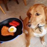 Quel type d'alimentation choisir pour son chien ?