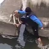 Sauvé de la noyade, ce chien ne cesse plus de remercier son sauveur (Vidéo du jour)